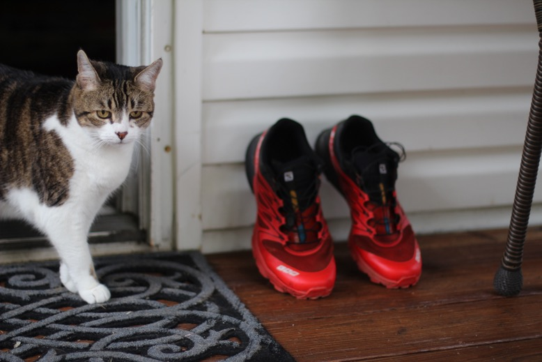 cat and running shoes